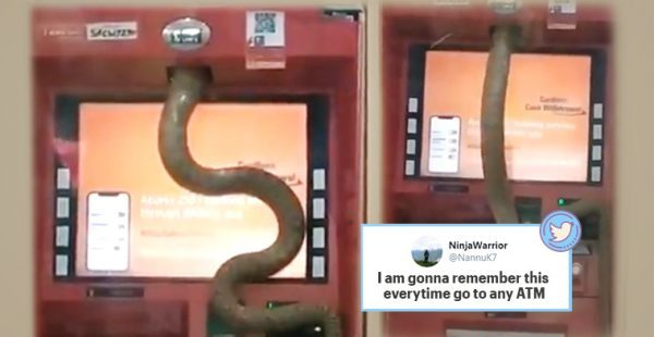 'It wants the hiss-ab': Video of snake slithering inside Ghaziabad ATM goes viral