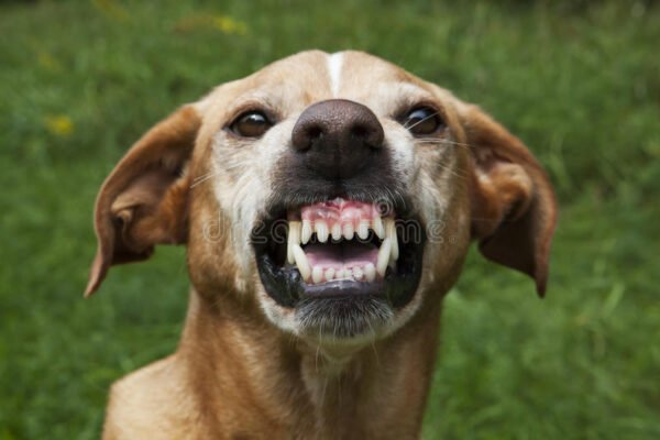 Dog Tears A Lady's Vagina While Allegedly Giving Her Oral S*x