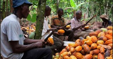 Increment In Cocoa Prices Not Just To Attract Votes- Nana Addo Dankwa Akufo-Addo