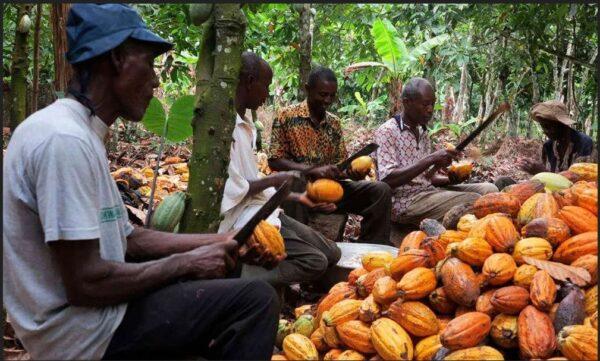 Increment In Cocoa Prices Not Just To Attract Votes- Nana Addo Dankwa Akufo-Addo