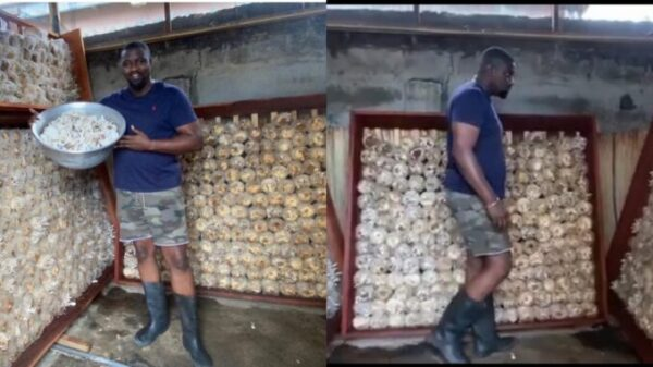 See Inside John Dumelo's BIG Mushroom Factory He Built in Ayawaso West Constituency That Gets Everyone Talking - VIDEO/PHOTOS