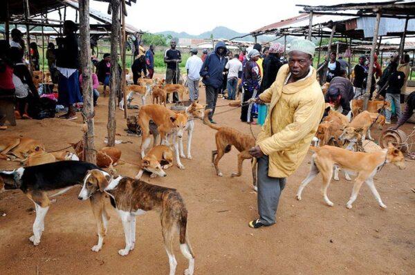 Dog Market scaled